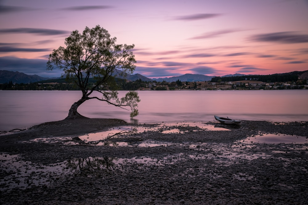 tree beside the body of water