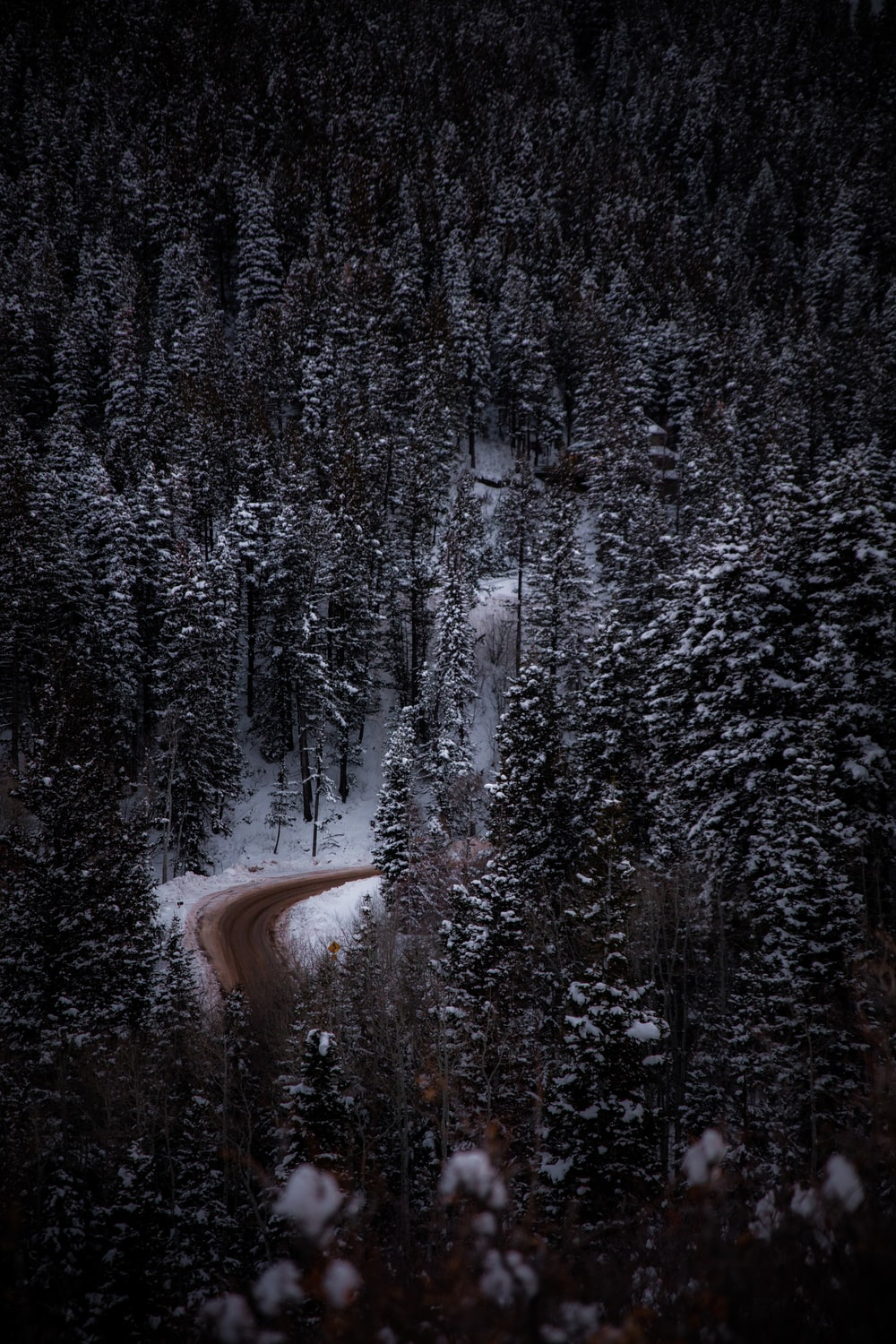 aerial view photography of road surrounded by snow-covered trees