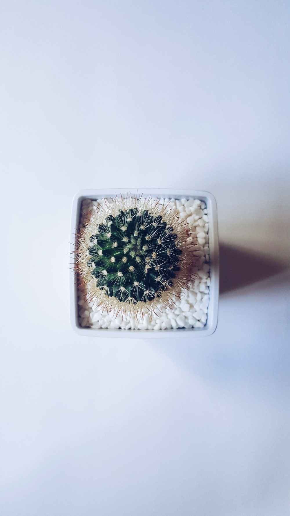 cactus succulent plant on white vase