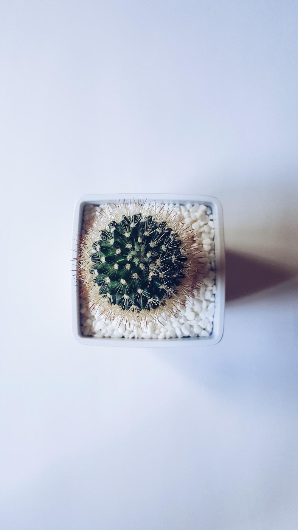 cactus succulent plant on white vase