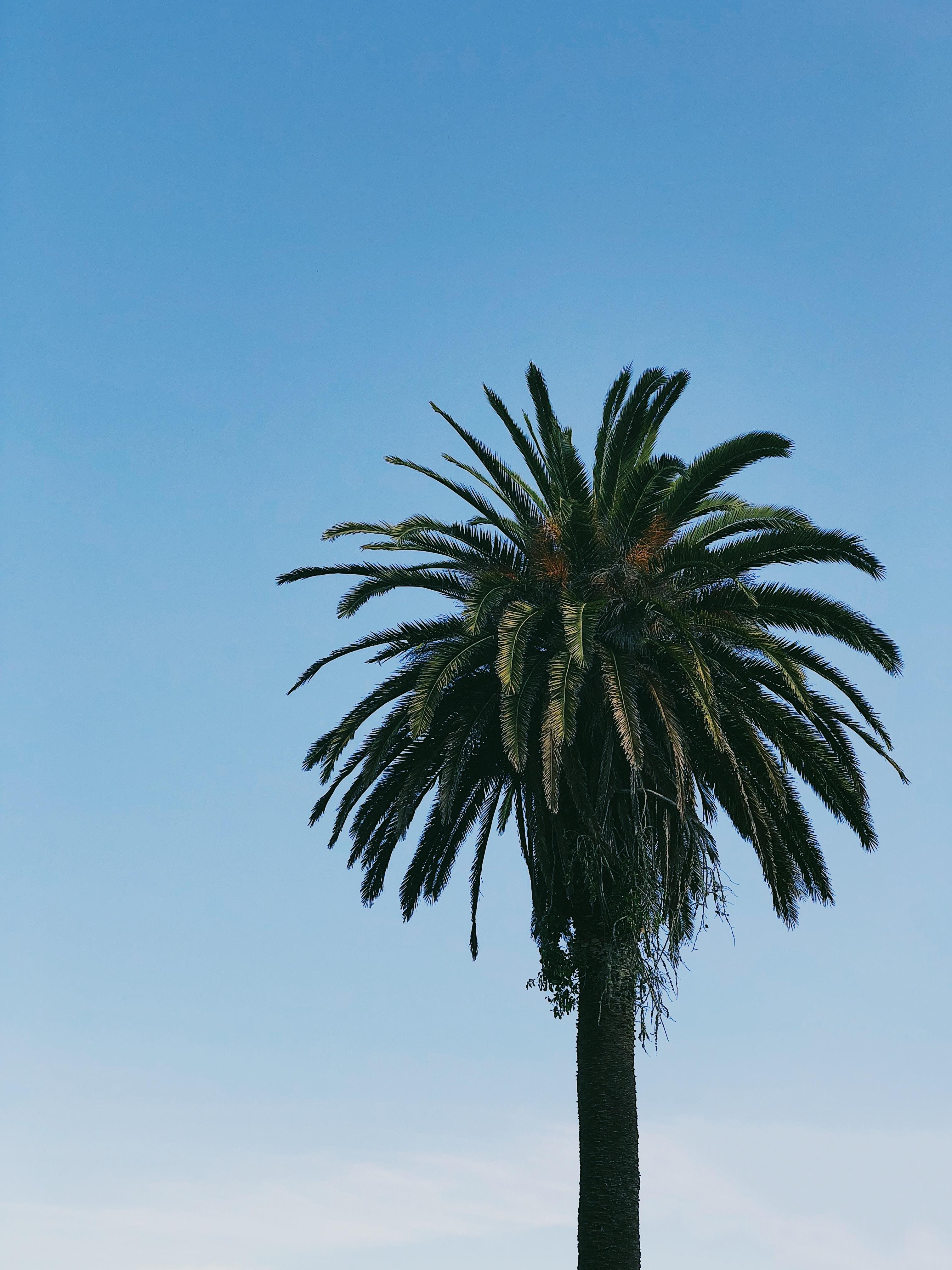 photo of green palm tree