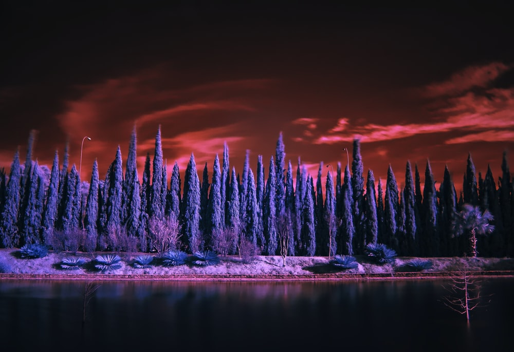 landscape photography of blue trees