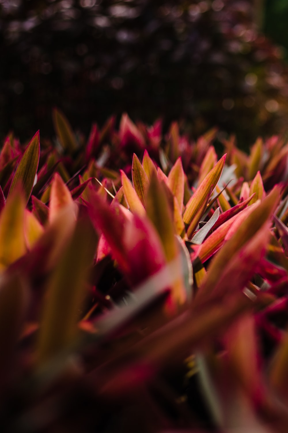 closeup photography of pink-and-brown leafed plants