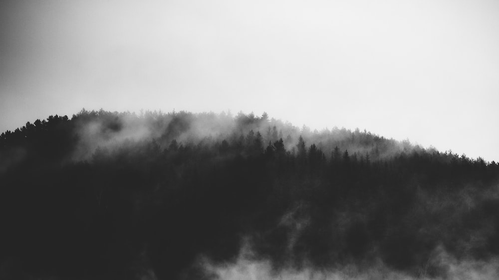 grayscale photography of trees covered mountain