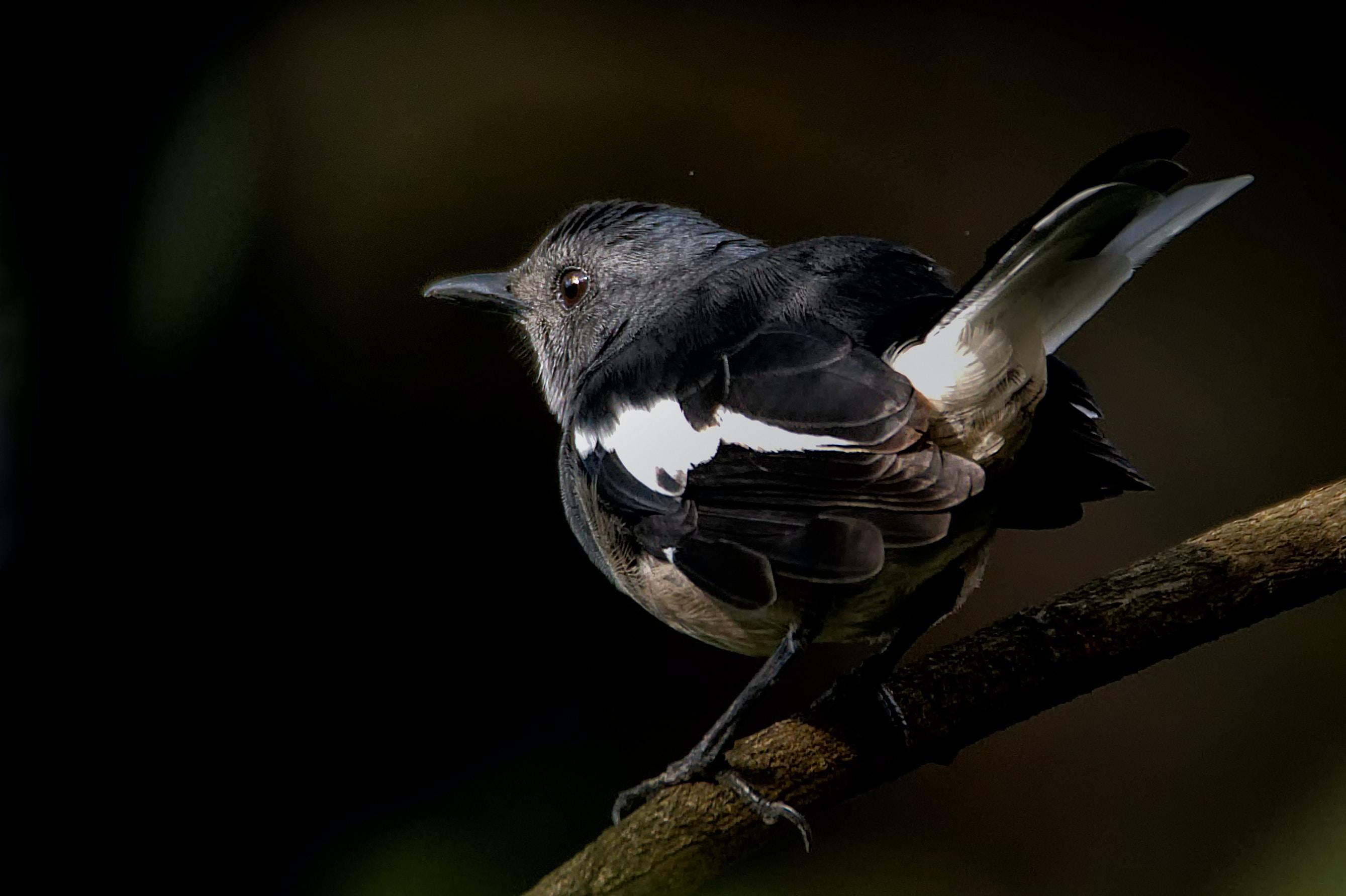 closeup photo of black bird