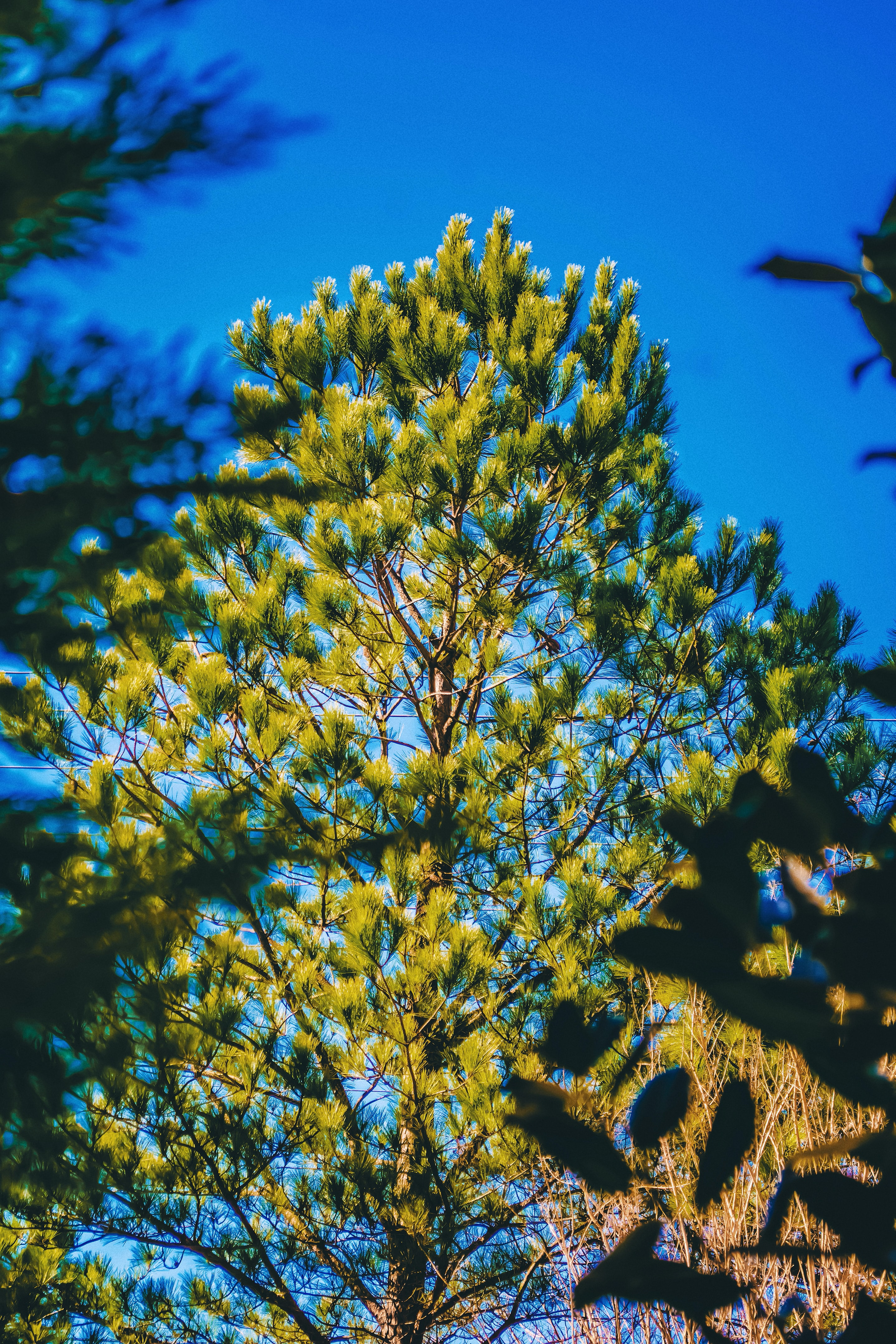 shallow focus photography of green leafed tree under clear blue sky