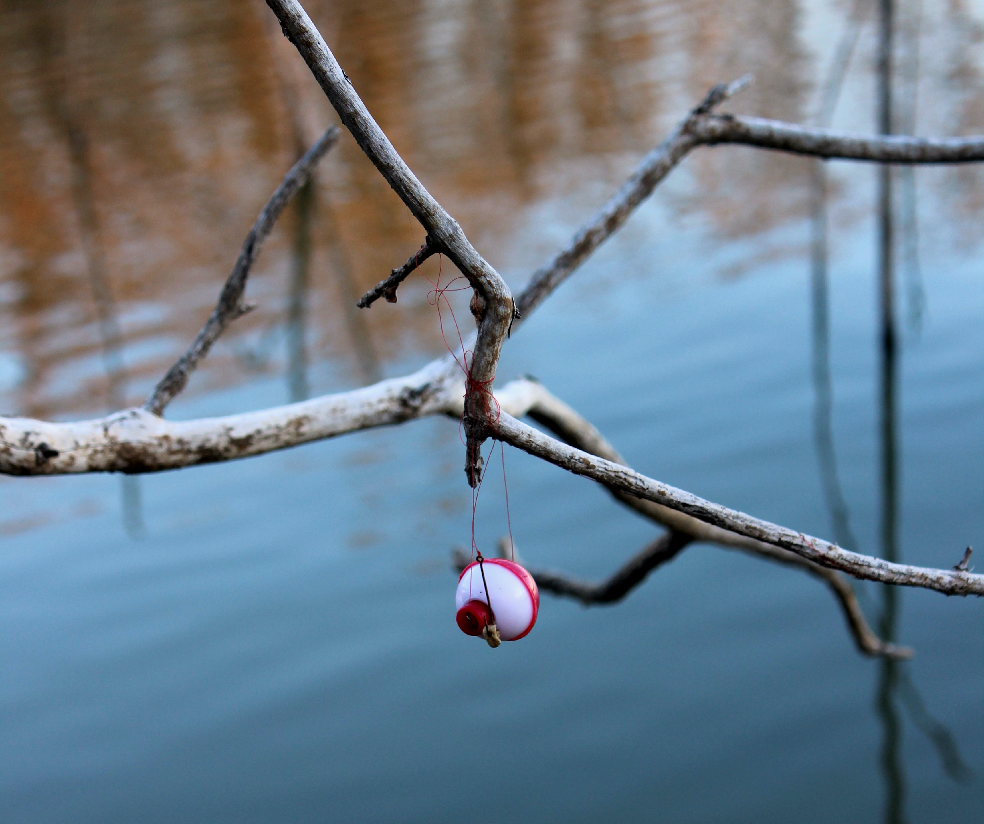 fishing lure on branch