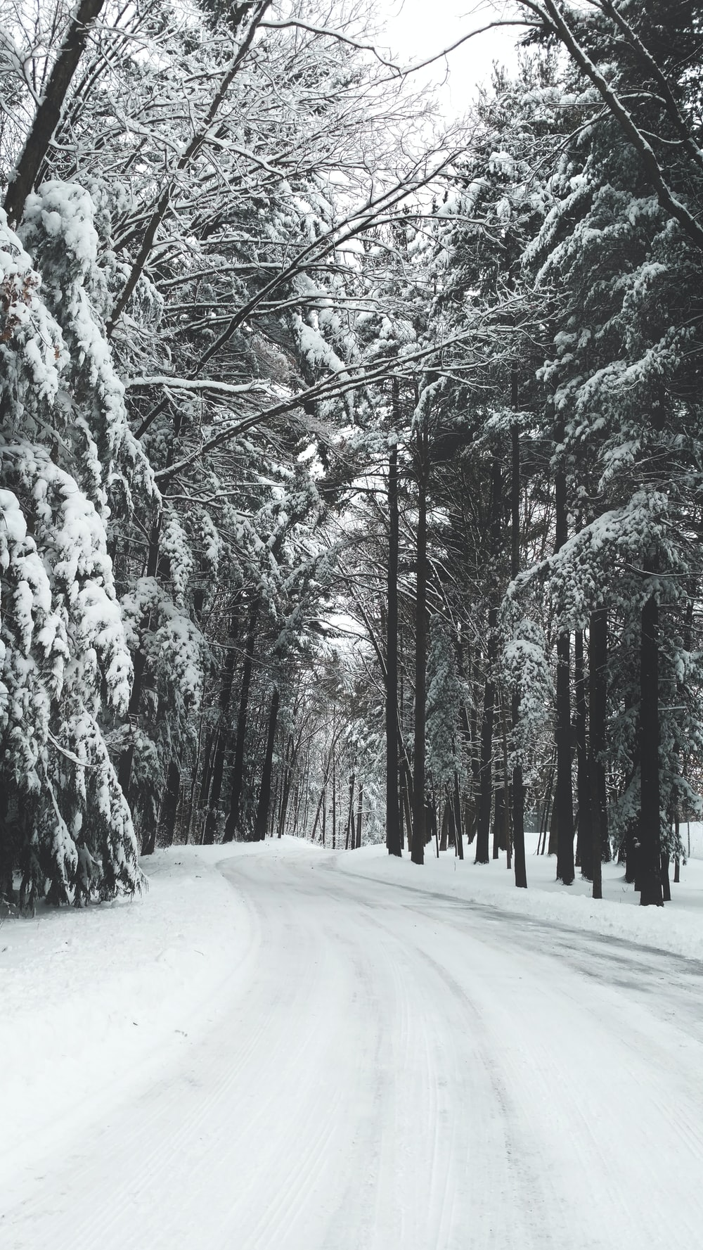 road surrounded by trees during winter