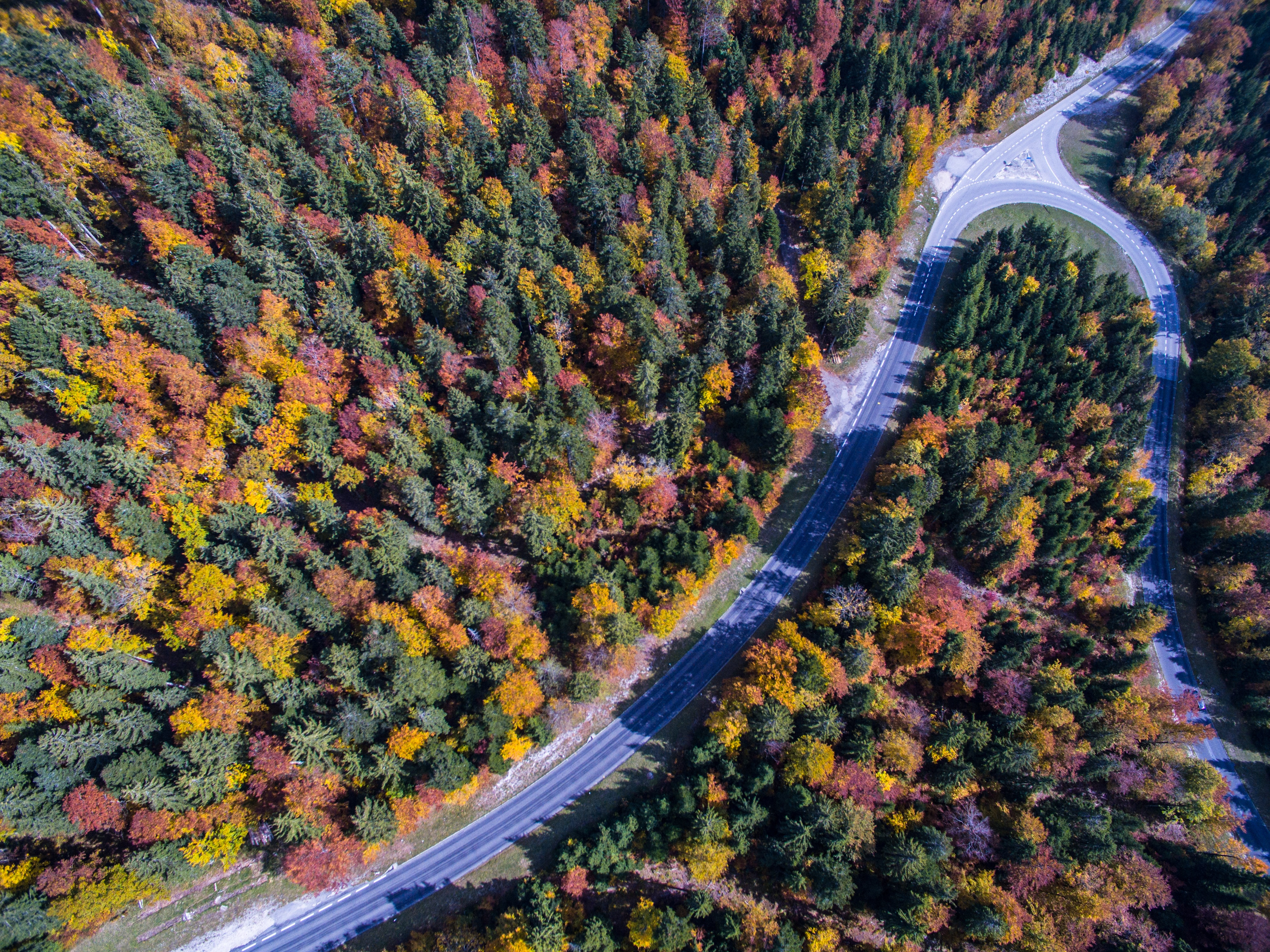 aerial view photography of road in between trees