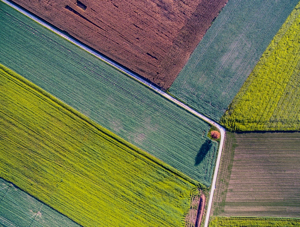 bird's eye view photo of plant fields
