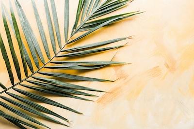 palm leaf tropical zoom background