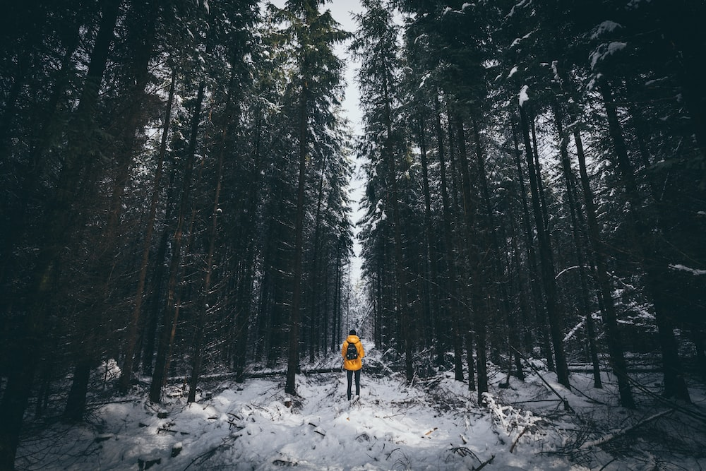 man standing surrounded with trees