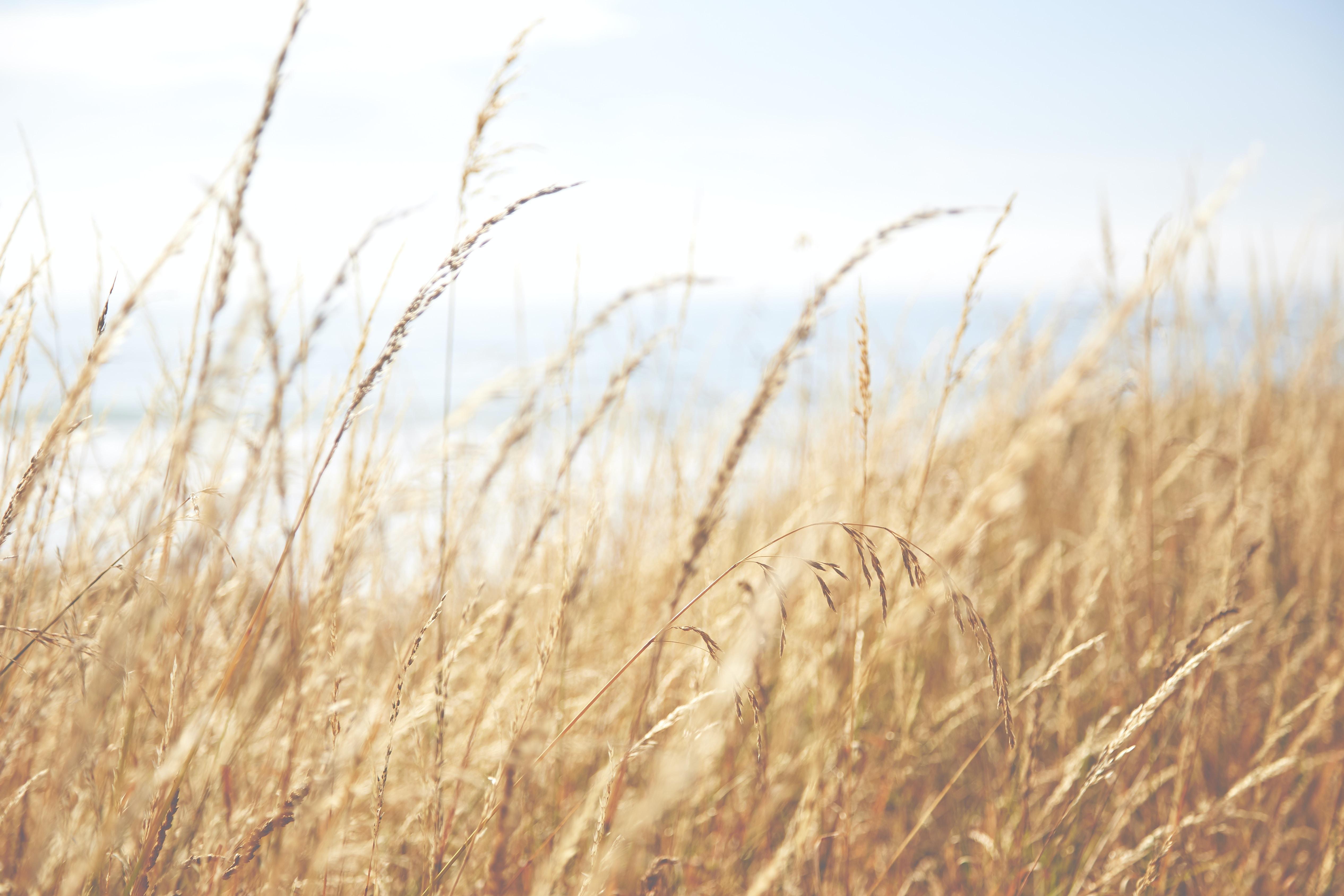 closeup photo of brown grass