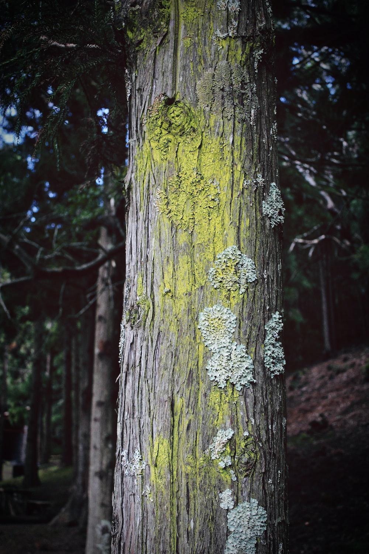 closeup photo of tree trunk