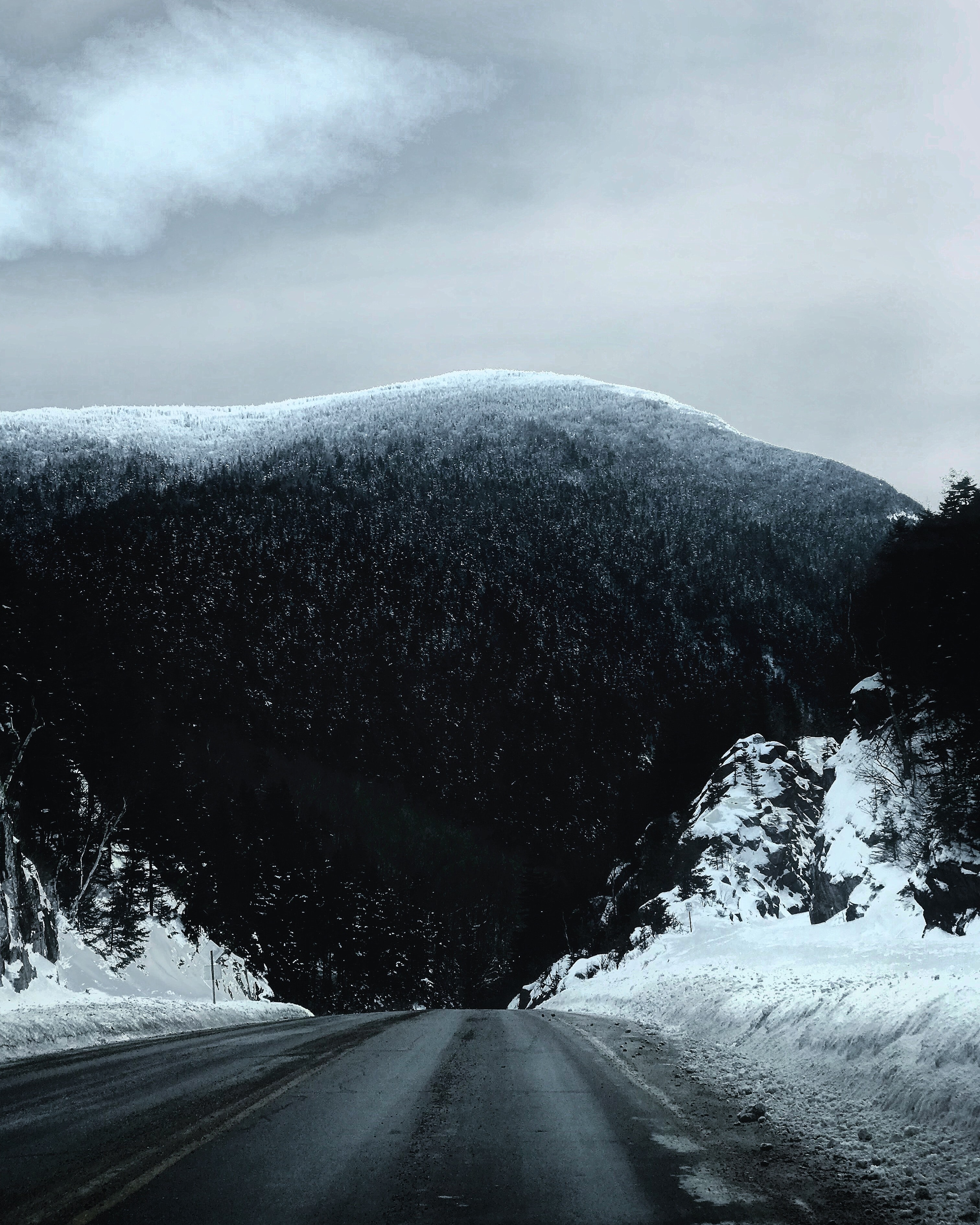 road with trees covered with snow