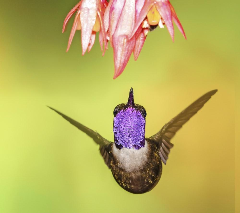 shallow focus photography of brown hummingbird