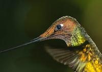 selective focus photography of green and yellow long-beaked bird