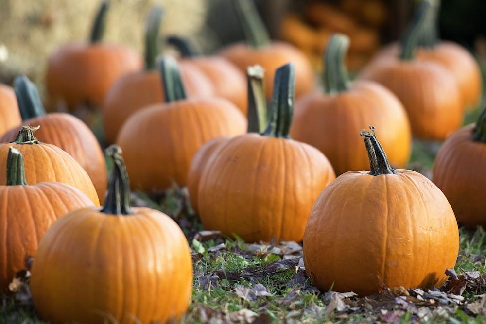 stoner halloween, pumpkin bong