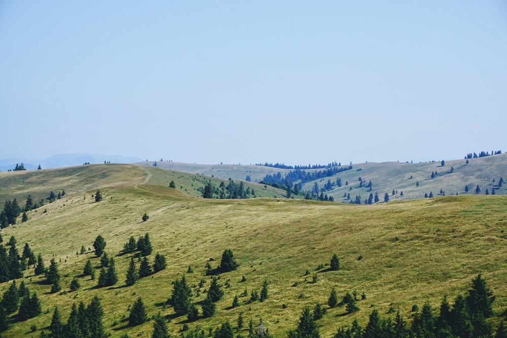 green pine trees on hill during daytime