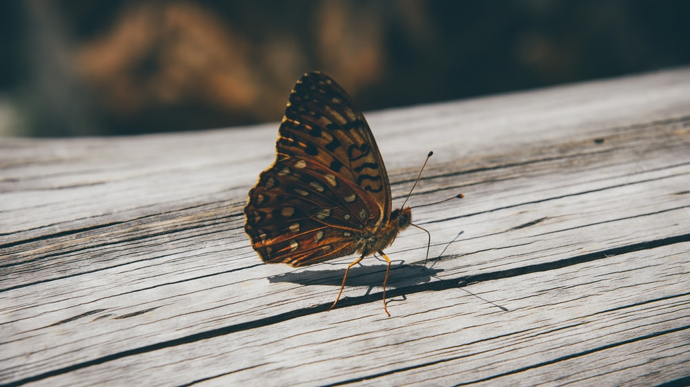 closeup photo of brown butterfly