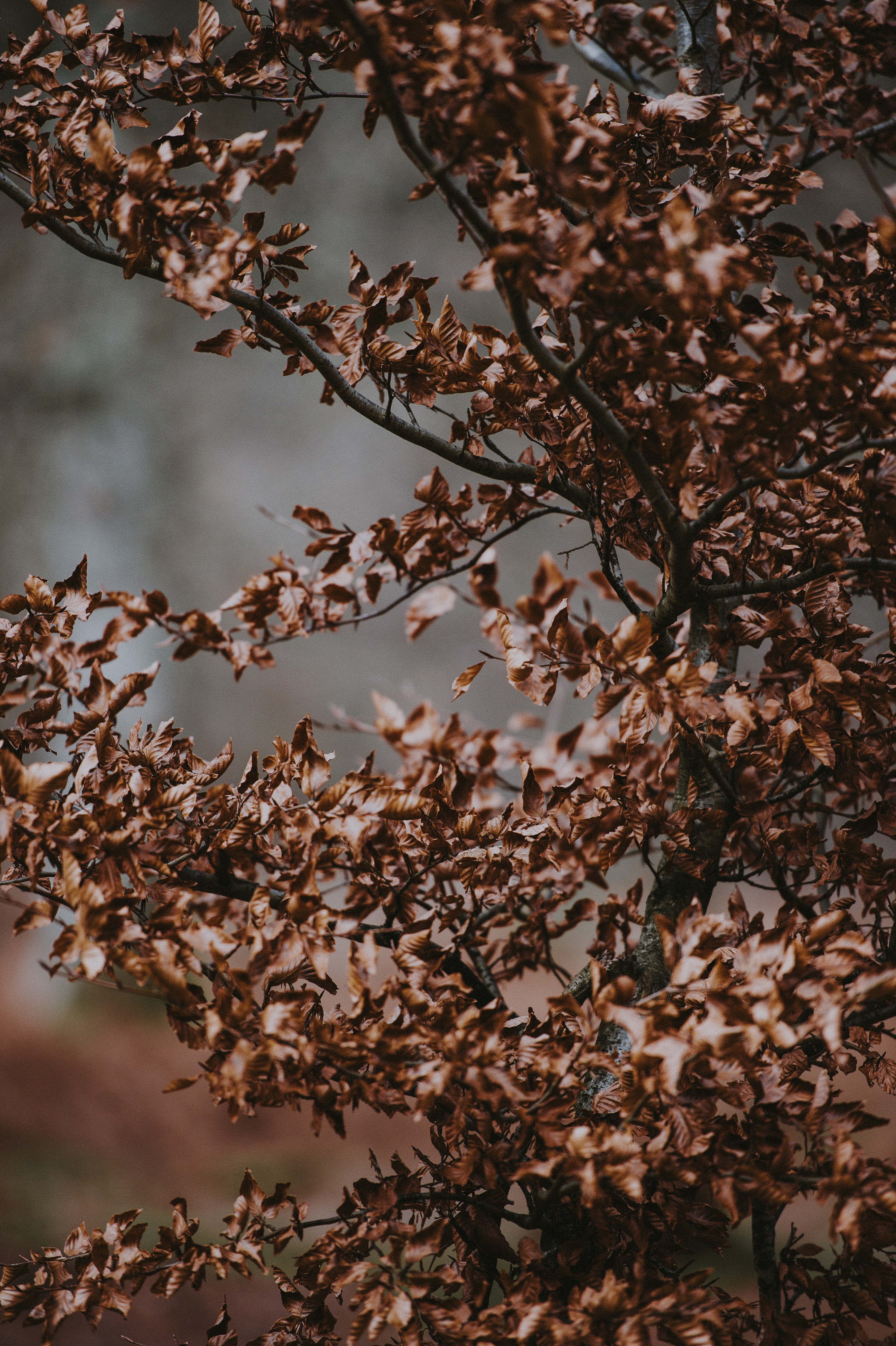focus photography of brown leafed tree