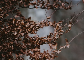 selective focus photograph of brown plant