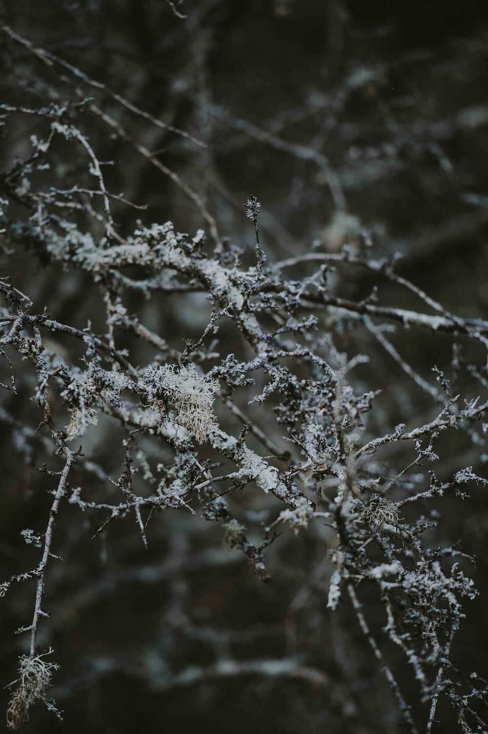 closeup photo of leafless twigs