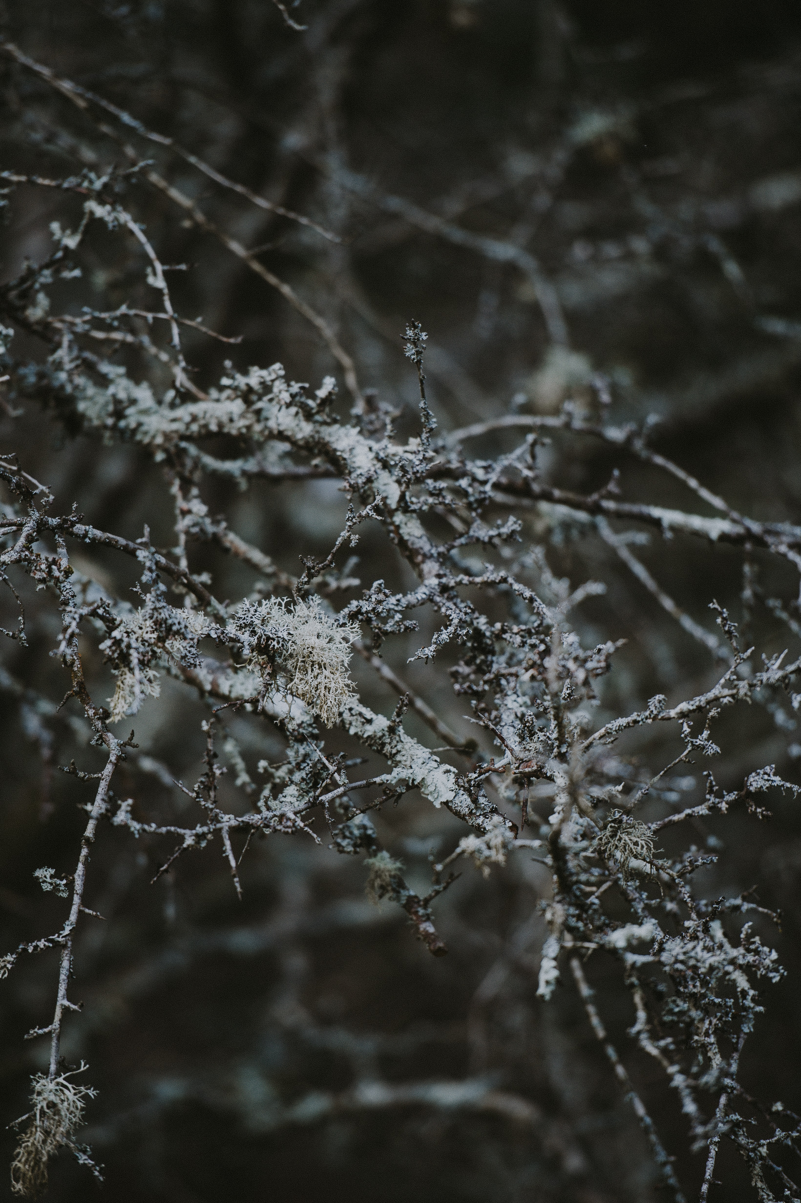 closeup photo of leafless twigs