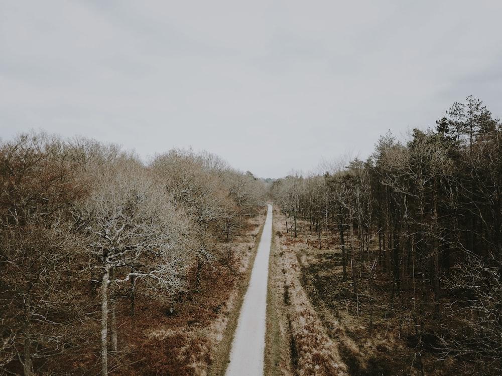 brown concrete pathway