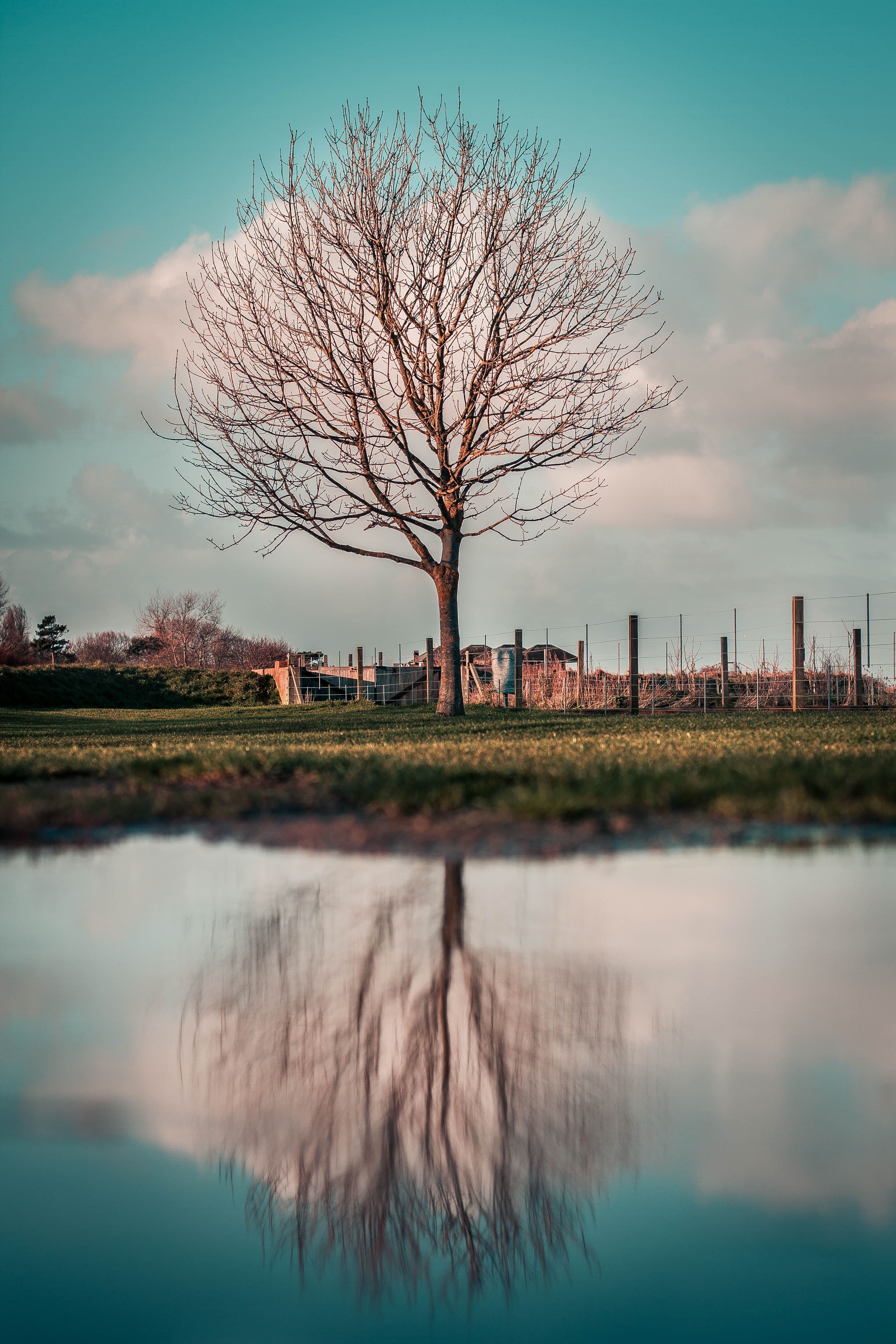 bare tree in pasture near body of water under cloudy sky