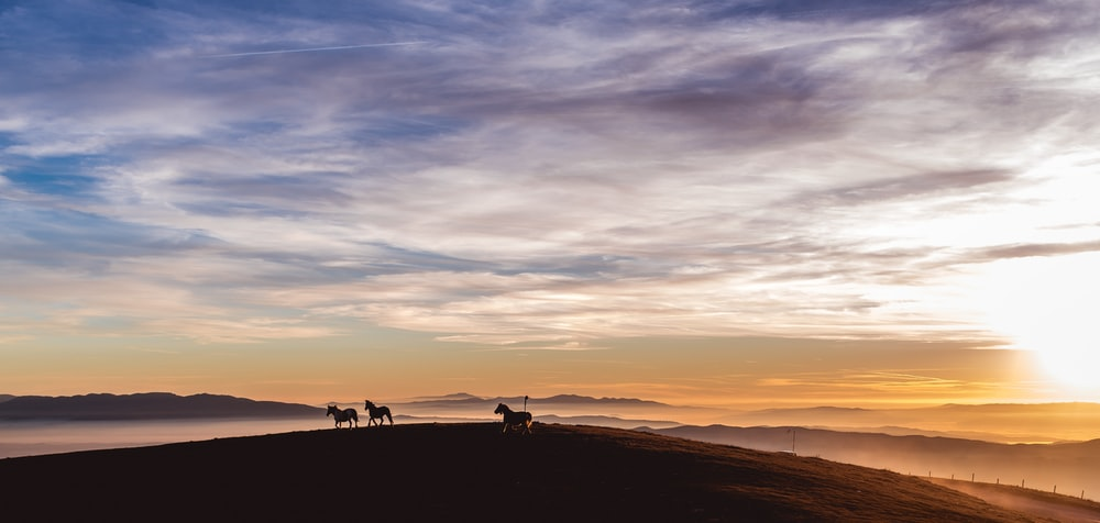 silhouette photo of horses