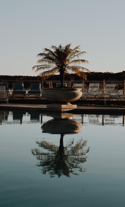 palm plant in white garden urn near fountain