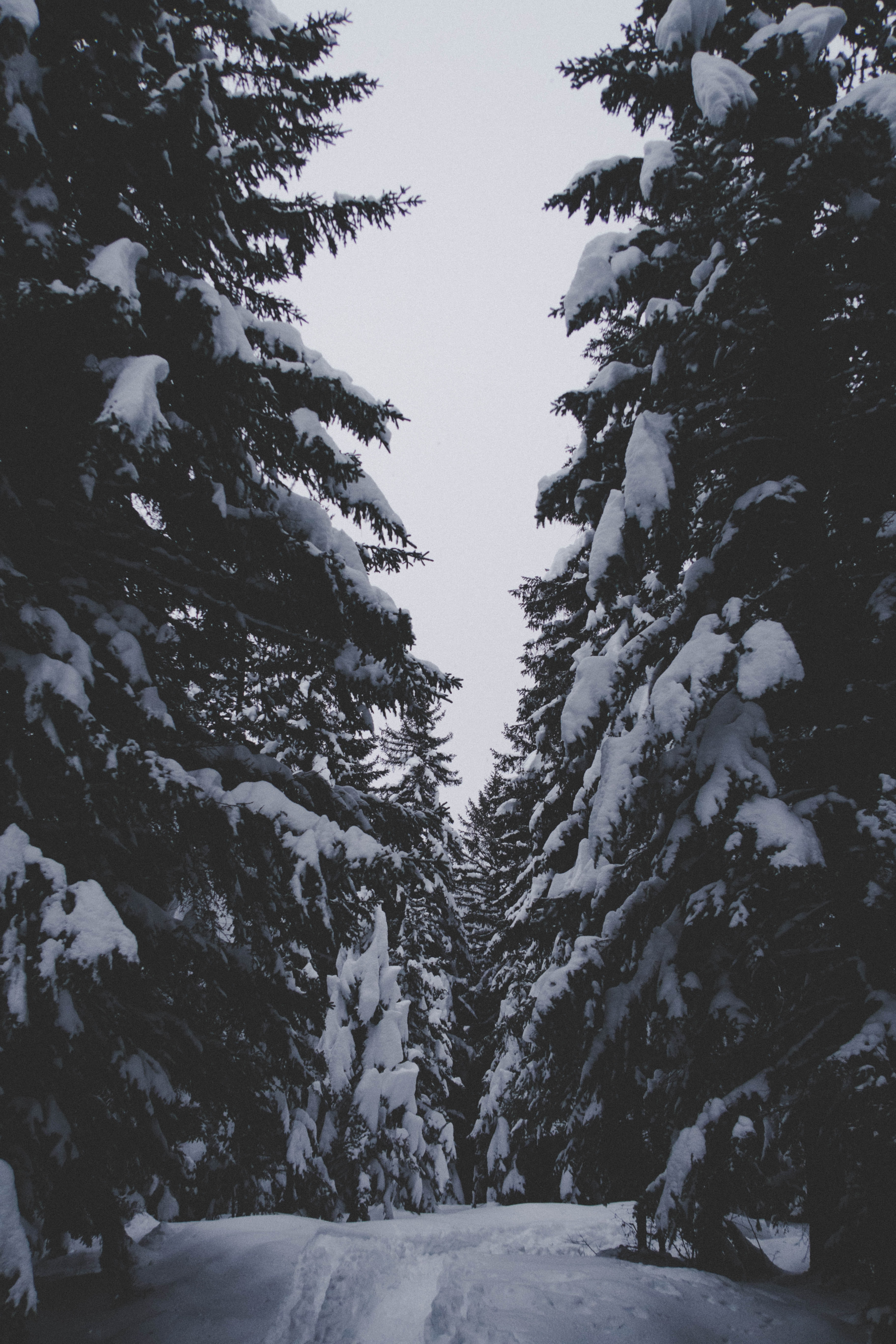 snow covered trees under clear sky