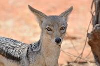 shallow focus photography of grey animal