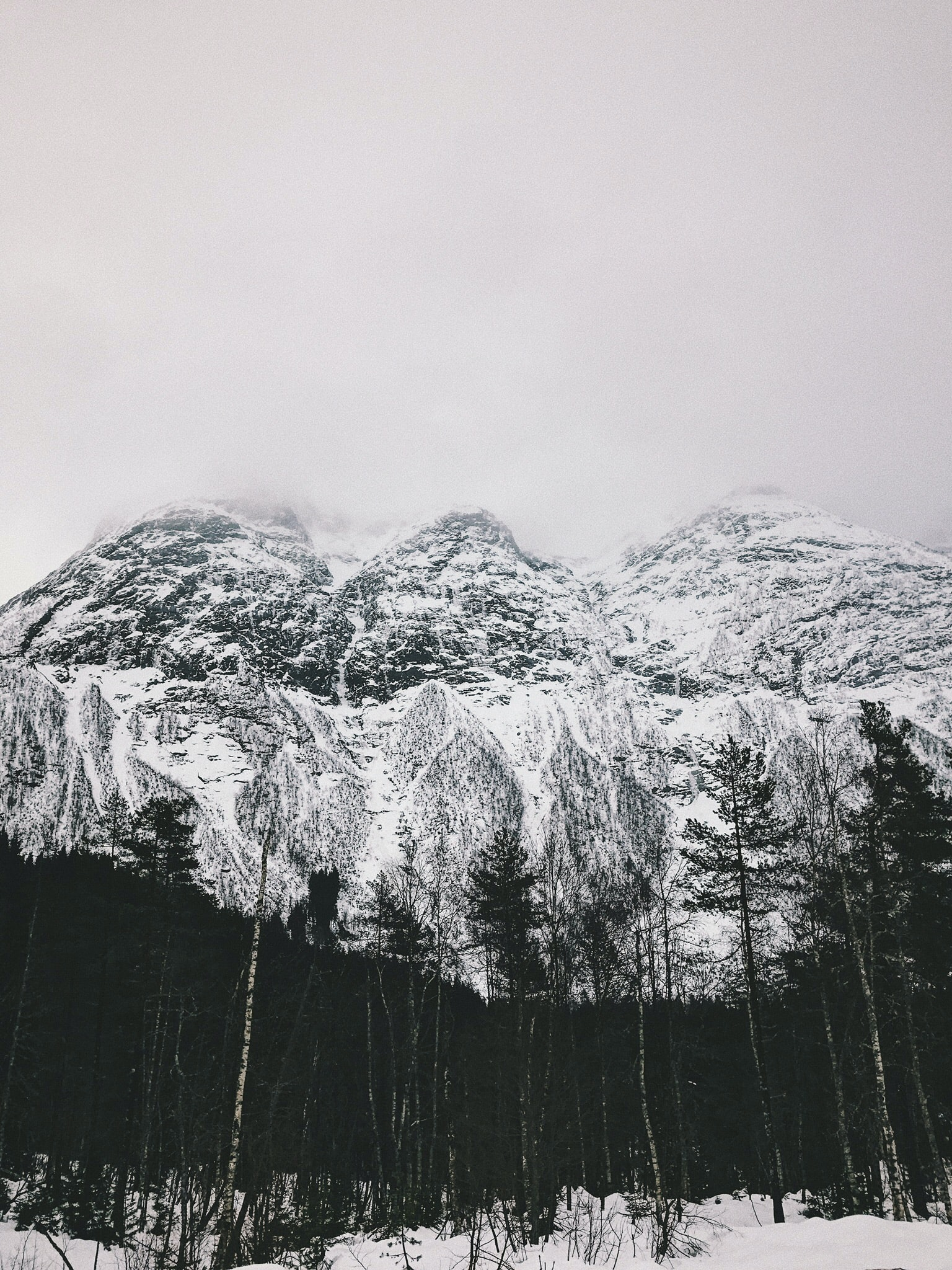 landscape photo of trees and mountain covered with snow
