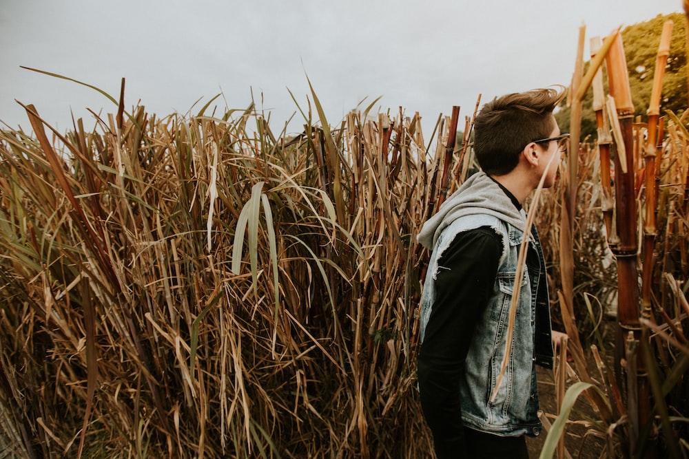 man standing on dried sugar cane field