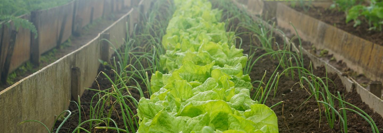 Organic Gardening for Apartment Dwellers