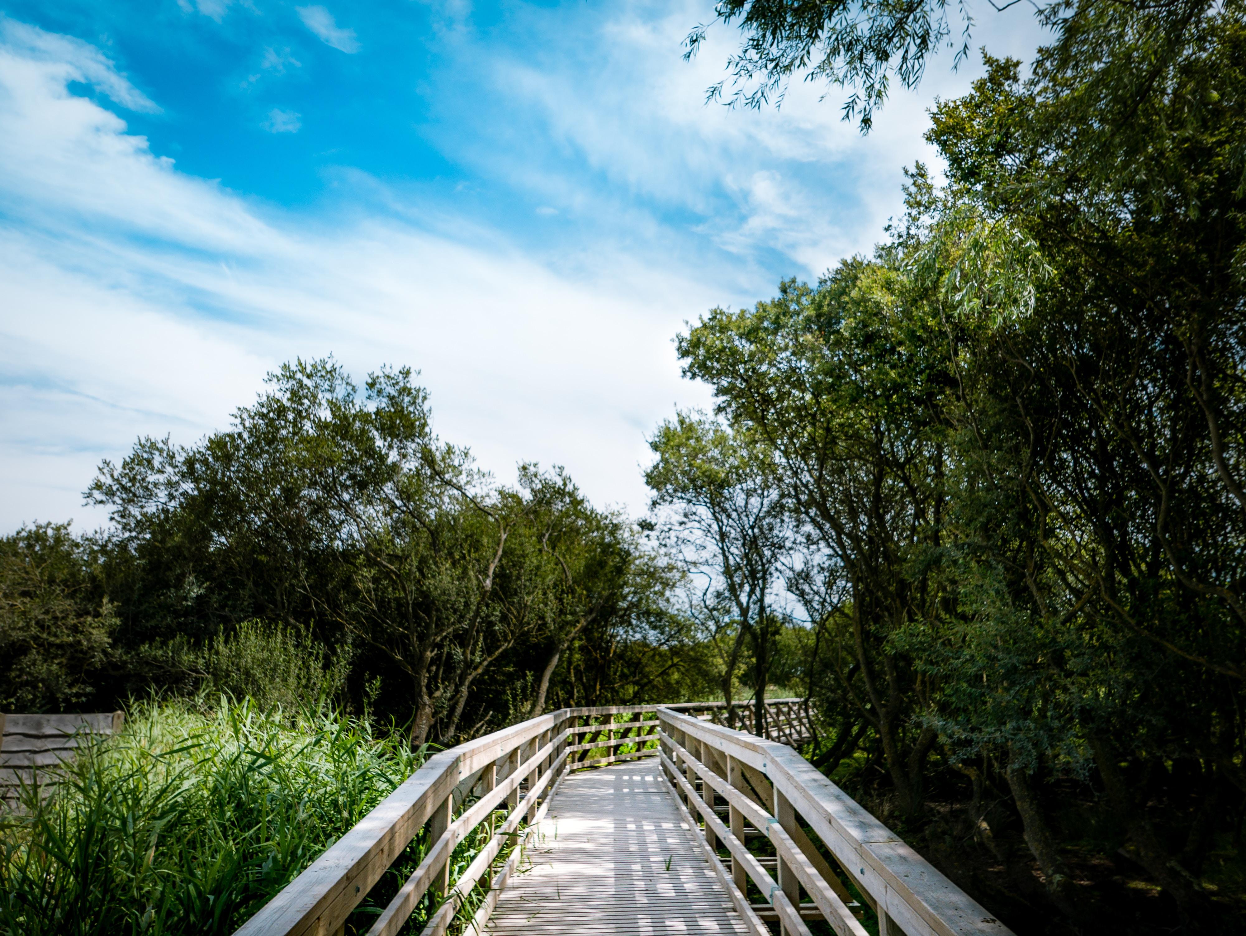 beige wooden bridge on between trees