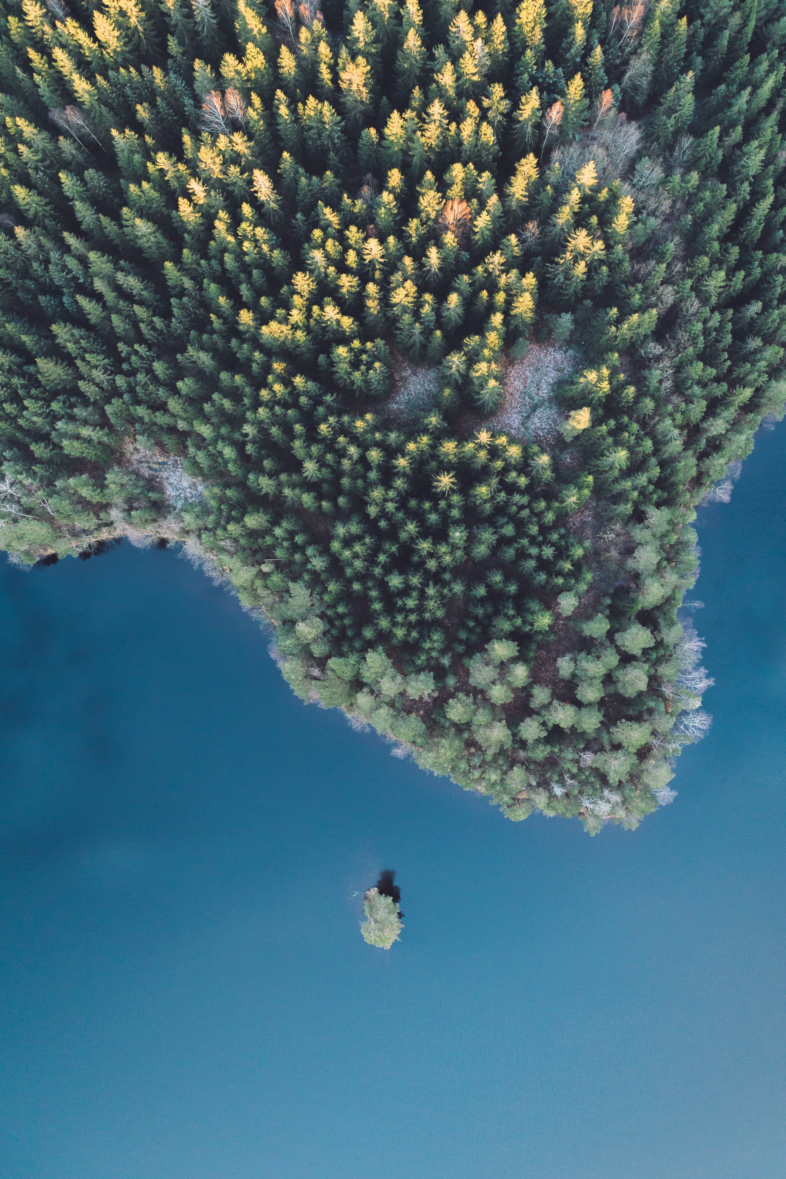bird eye view photography of green trees beside body of water