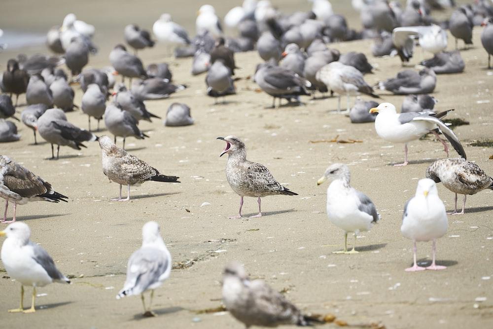flock of bird