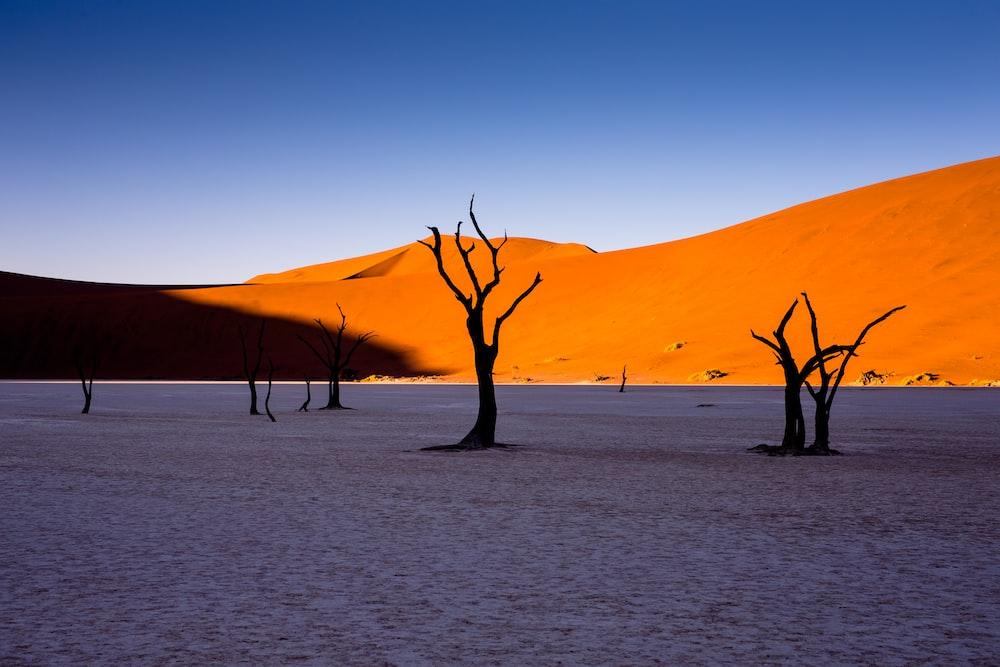 bare trees in desert under blue sky during daytime