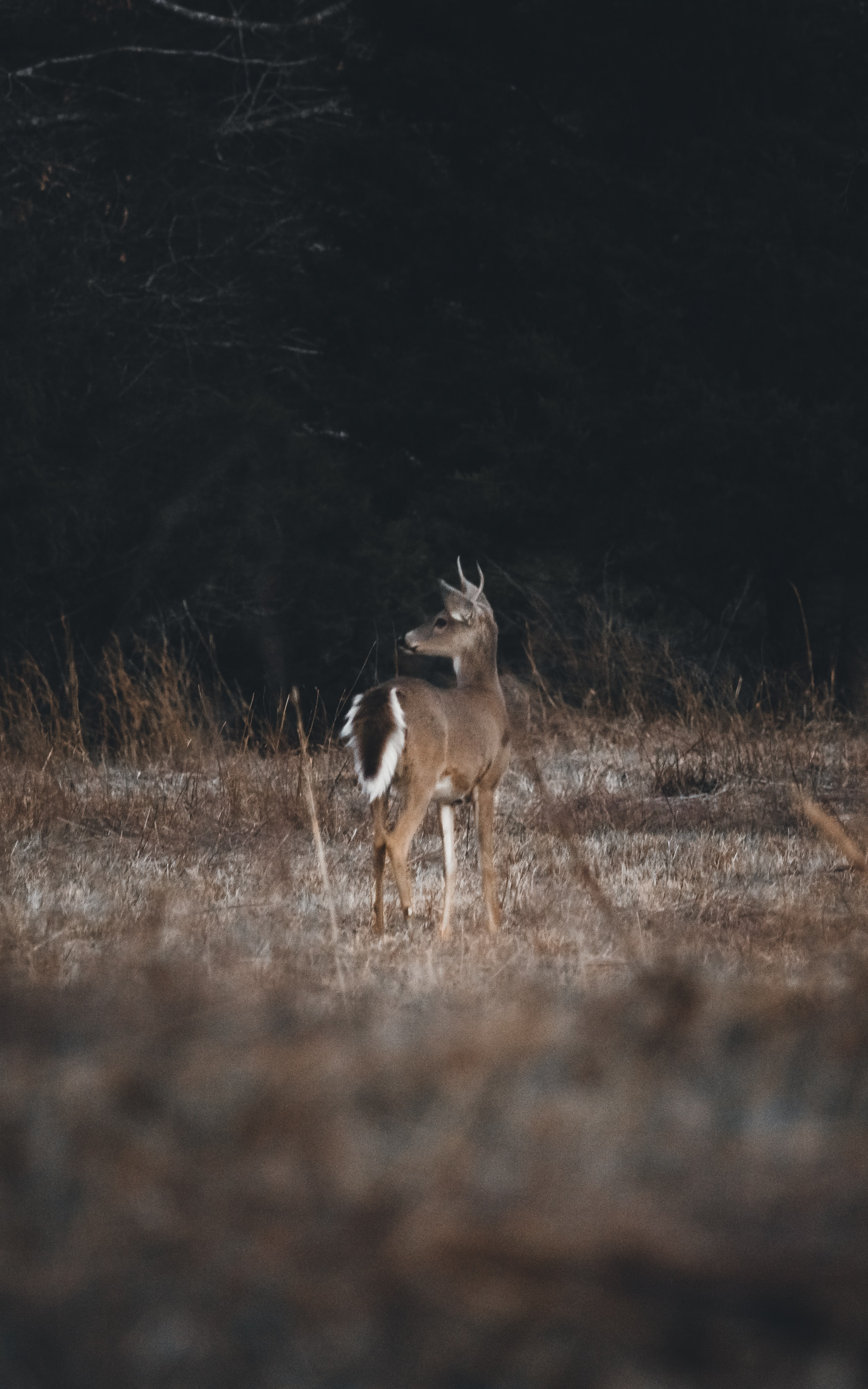 shallow focus photography of deer