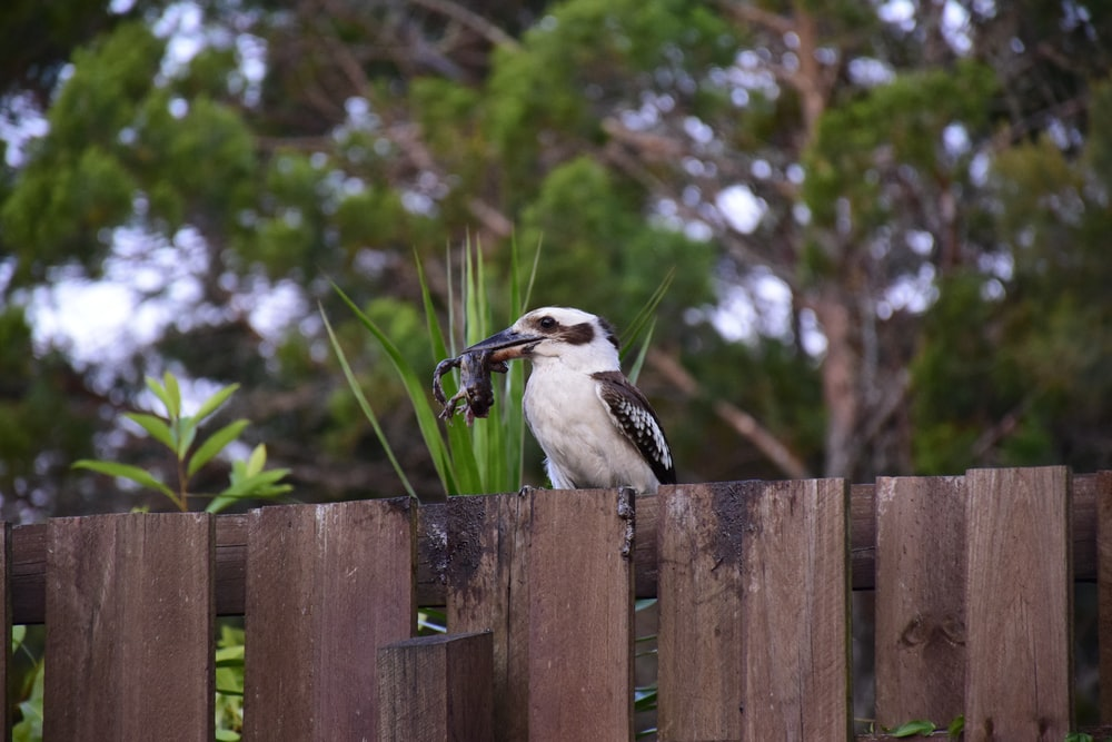 bird resting on fence carrying food