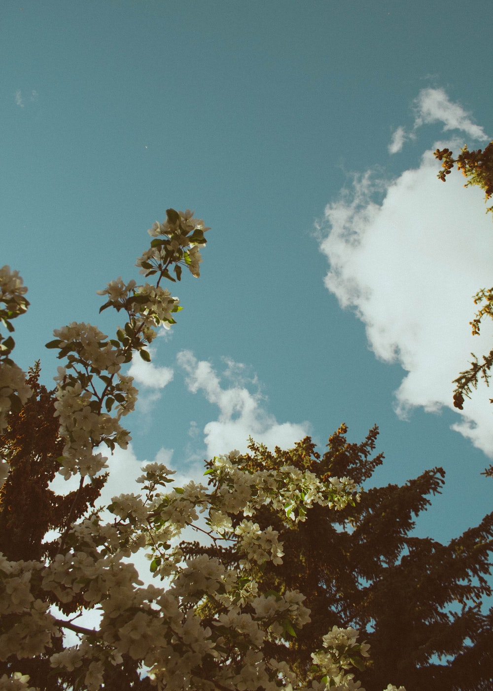 low angle photography of green tree and sky