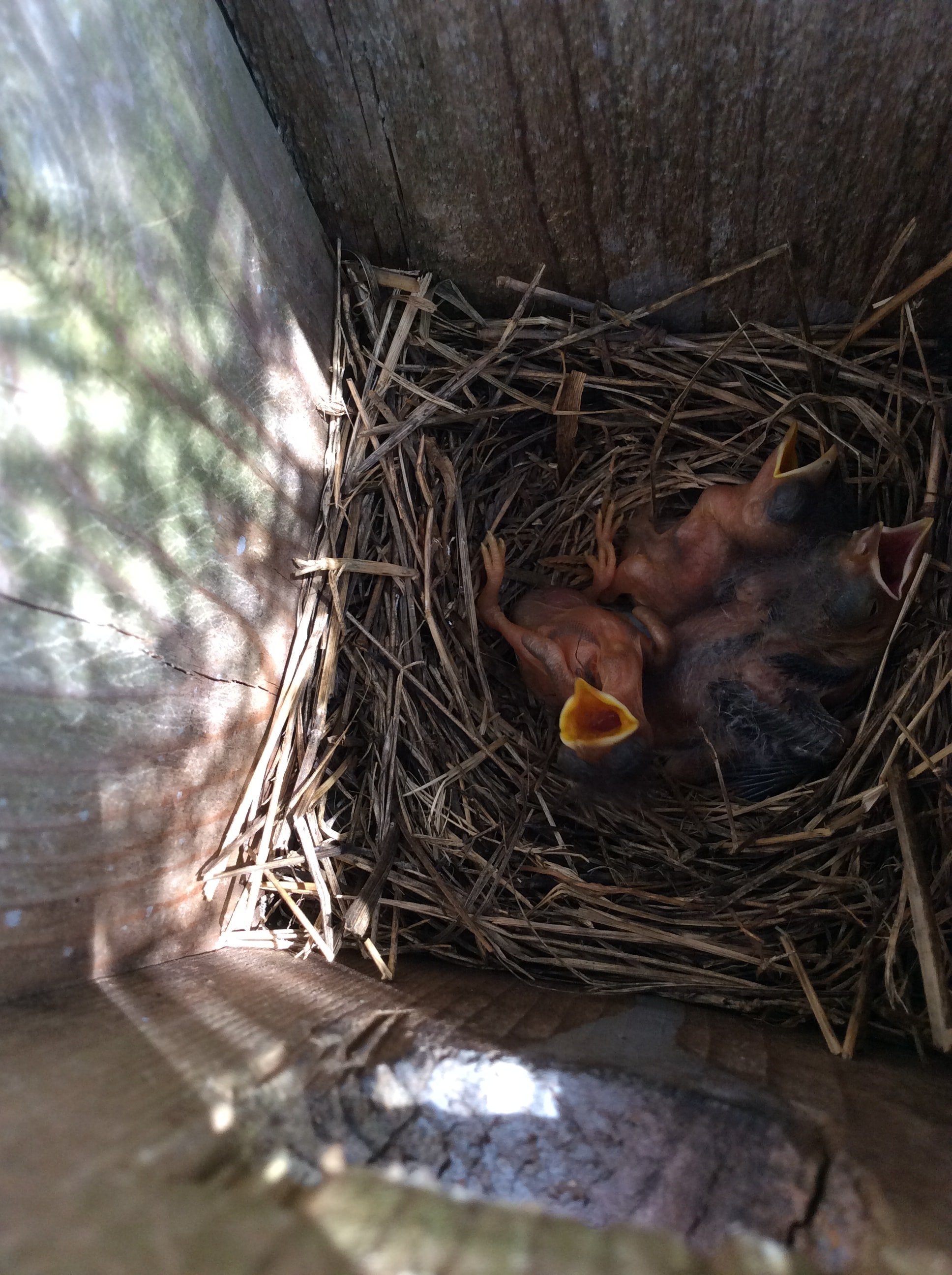 photo of baby birds on nest