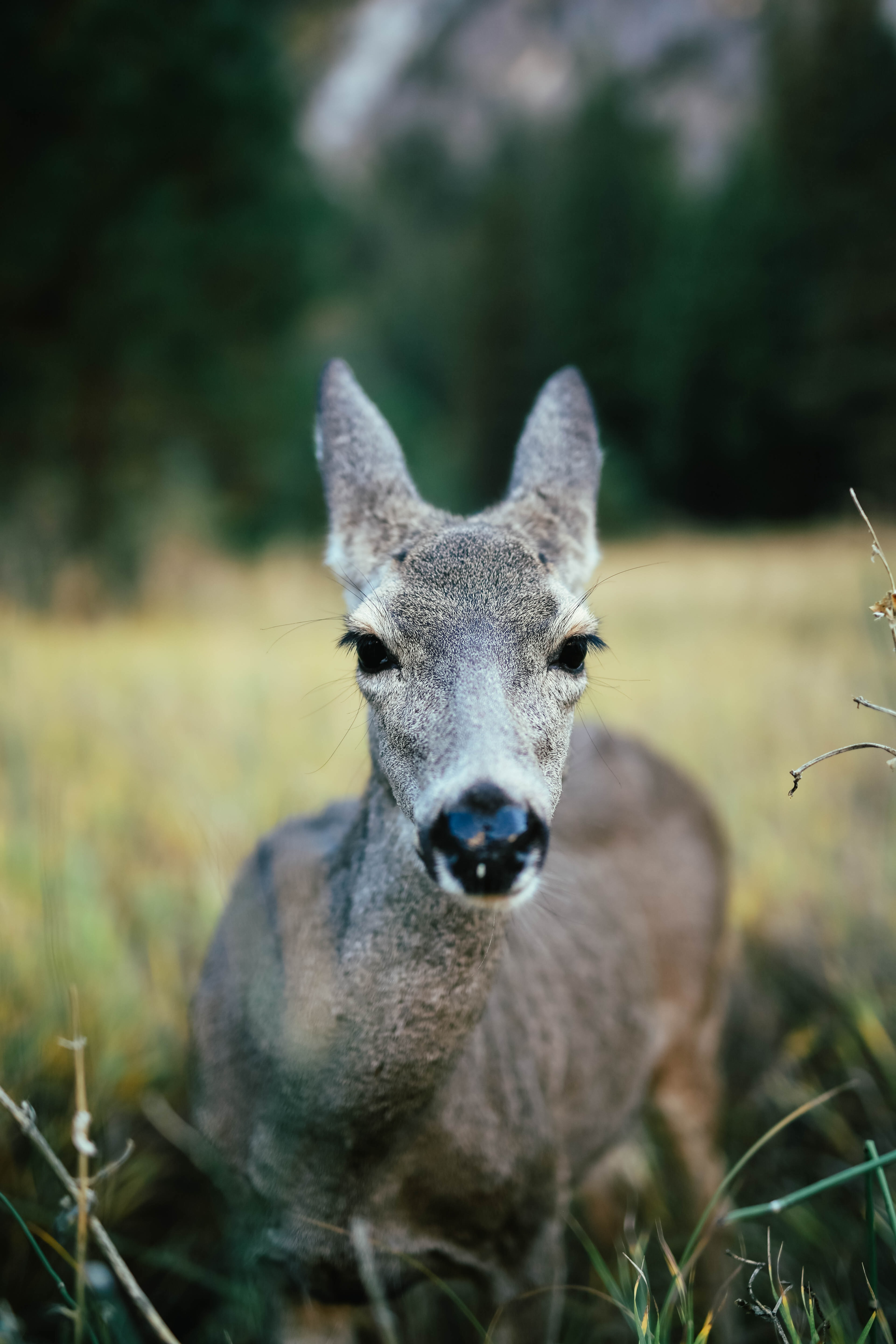 gray deer standing on grassland during daytime selective focus photography