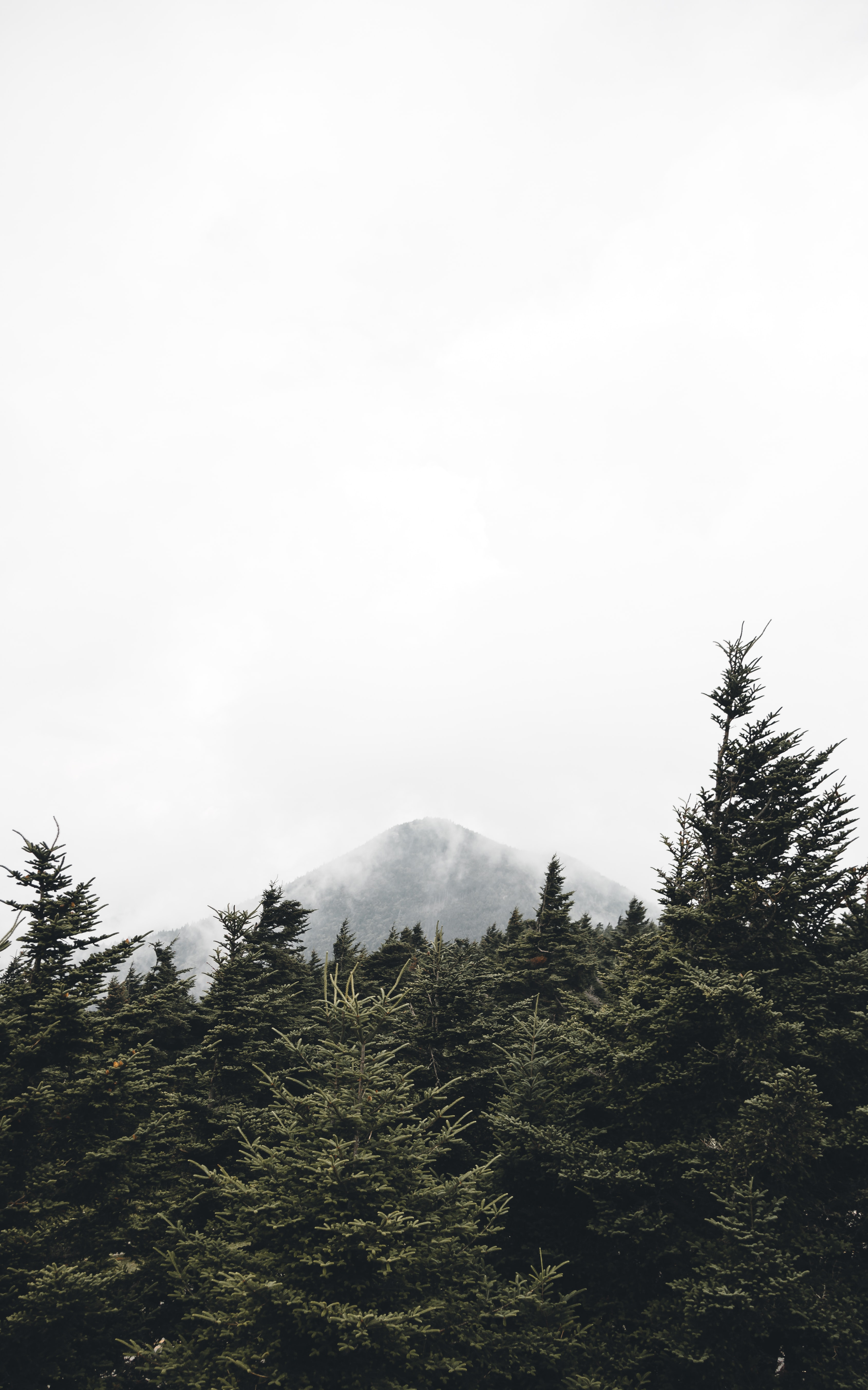 green pine trees near mountain with fogs