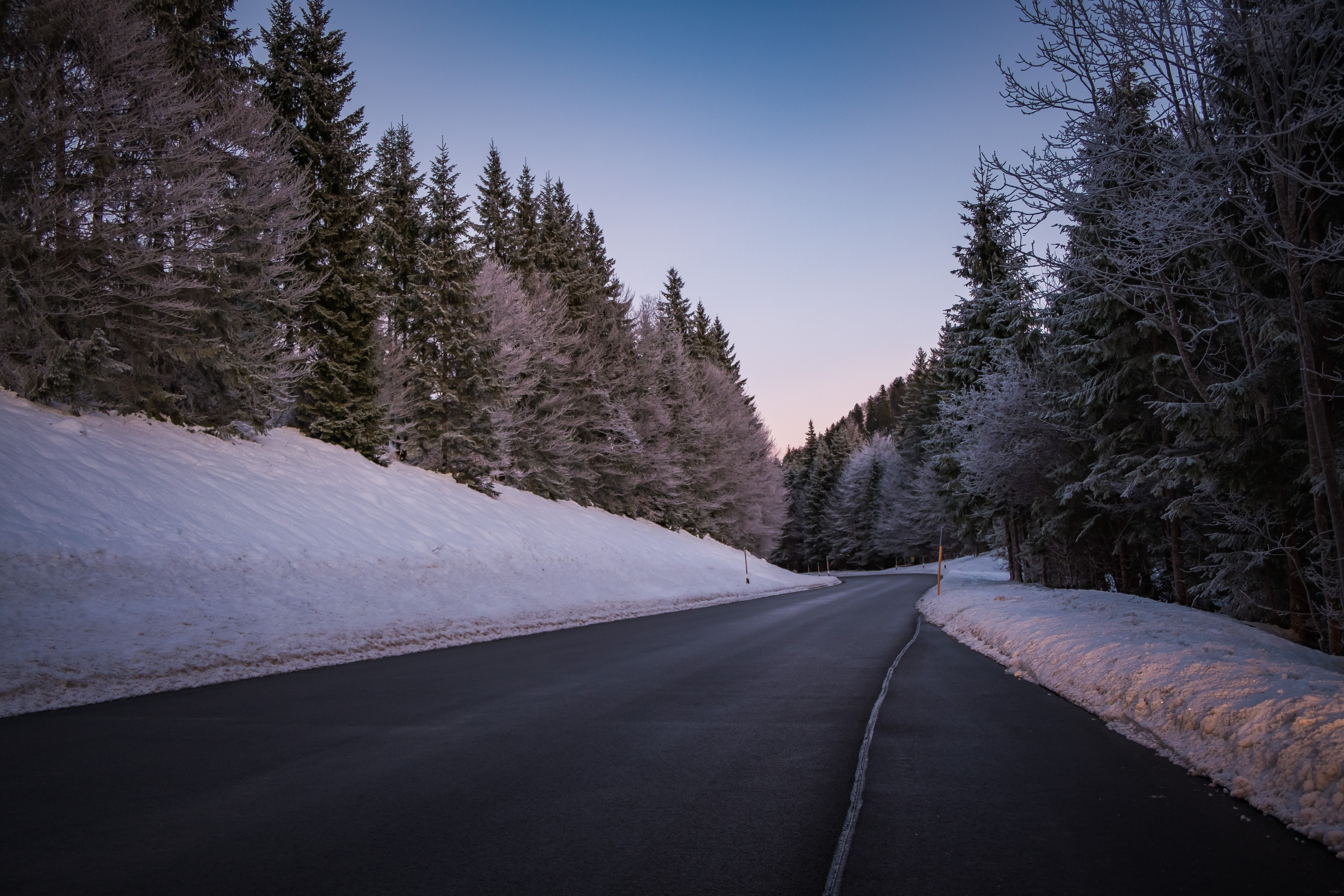 highway between snow-covered pine trees during daytime