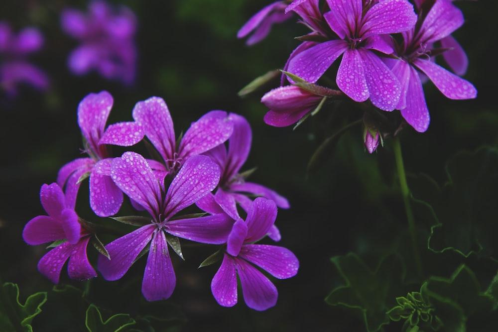 photography of purple petaled flowers