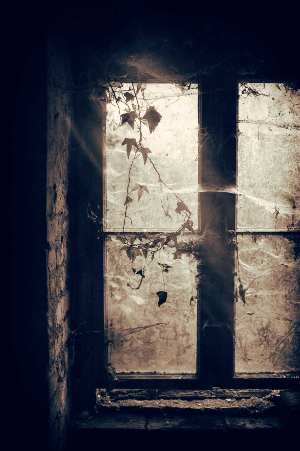 grayscale photo of closed window with spiders webs and plants